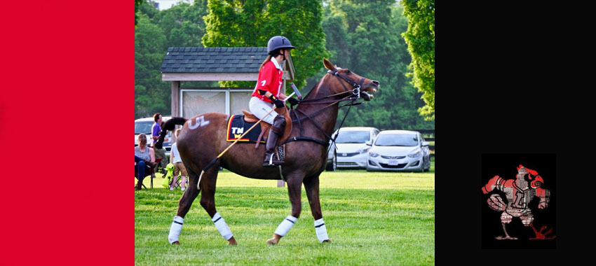 Louisville Polo saddles up for UofL medical research